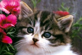 Cute-cat-hd-wallpapers-free-download-only-green-blog